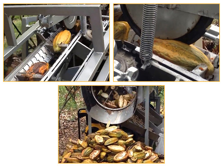 green cocoa bean seperator machine