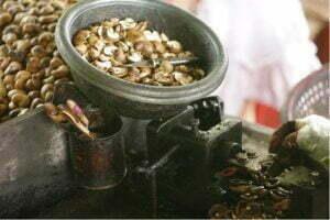 cashew nut shelling manually