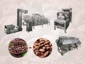 cocoa bean plant