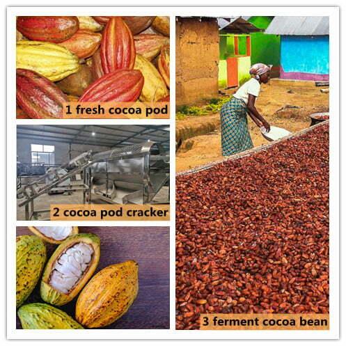 cocoa pod processing